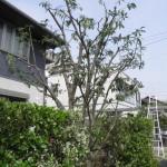 北九州 庭木剪定 植木屋
