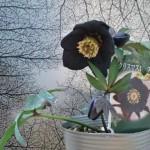 北九州花壇に花を植える