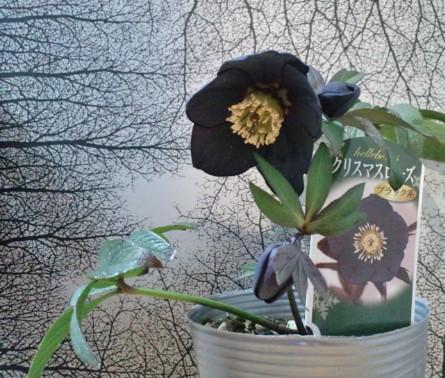 花壇の提案