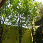 綺麗な植木屋剪定-flip-16