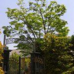 綺麗な植木屋剪定-flip-3