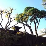 北九州 和風庭園