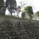 高い塀の上の剪定