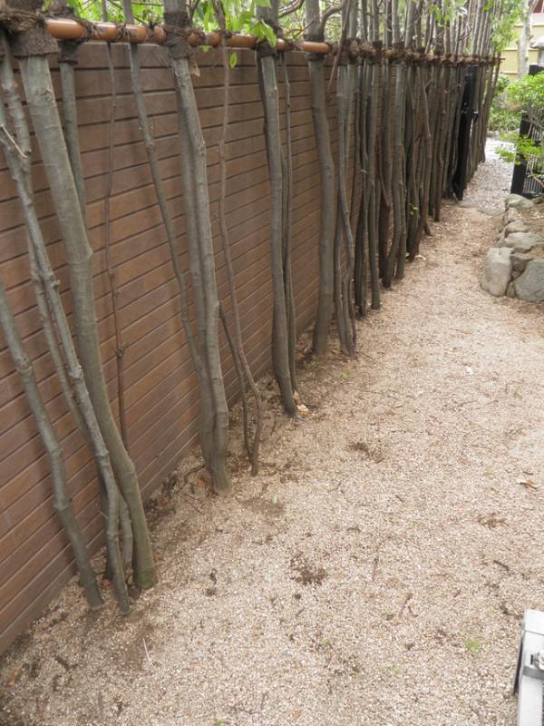 庭師の剪定技術 北九州