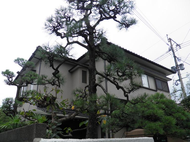 松の剪定 戸畑区