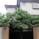 松の門かぶり 造園屋
