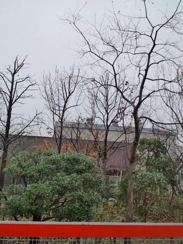 工場庭園管理 美しい樹形に