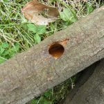 植木庭木の病害虫予防