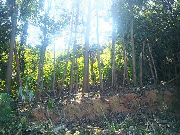 支障枝伐採