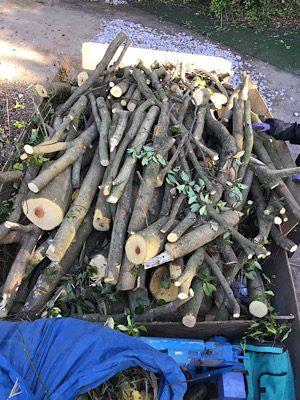 剪定伐採ゴミ