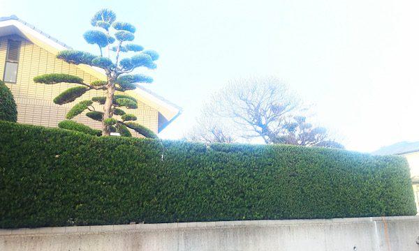 庭木 仕立物